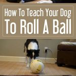 How To Teach Your Dog To Roll A Ball