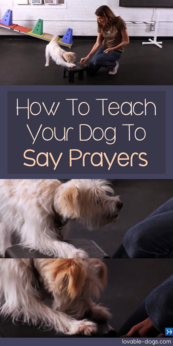 How To Teach Your Dog To Say Prayers