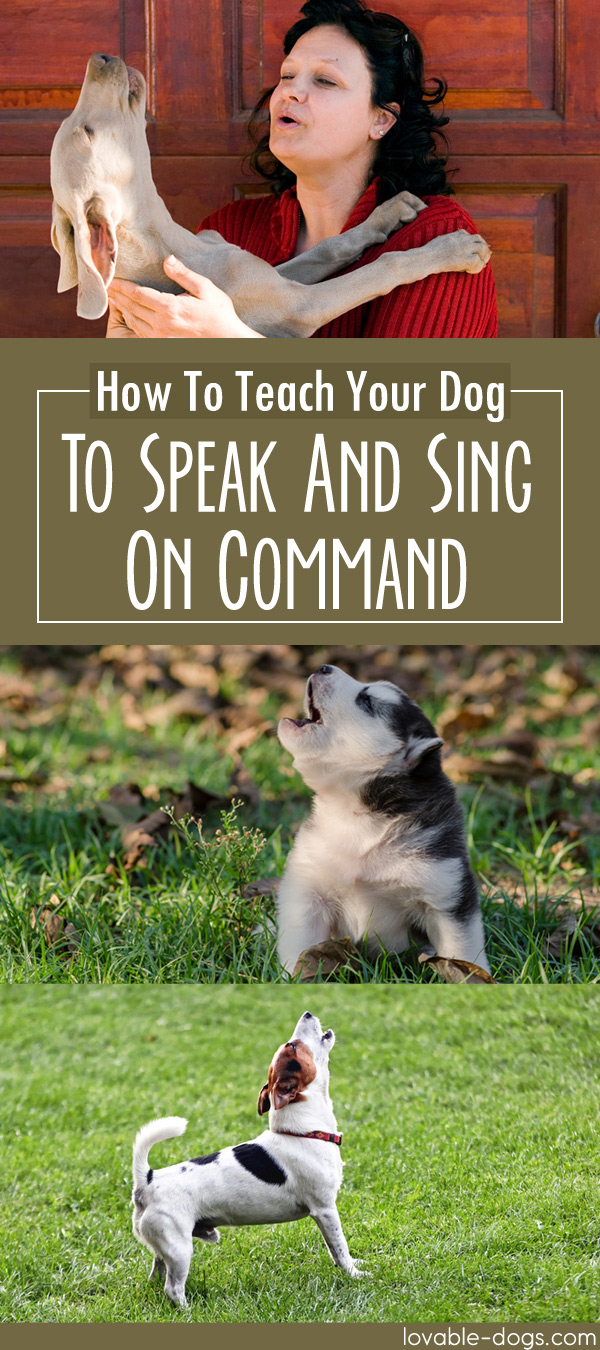How To Teach Your Dog To Speak And Sing On Command
