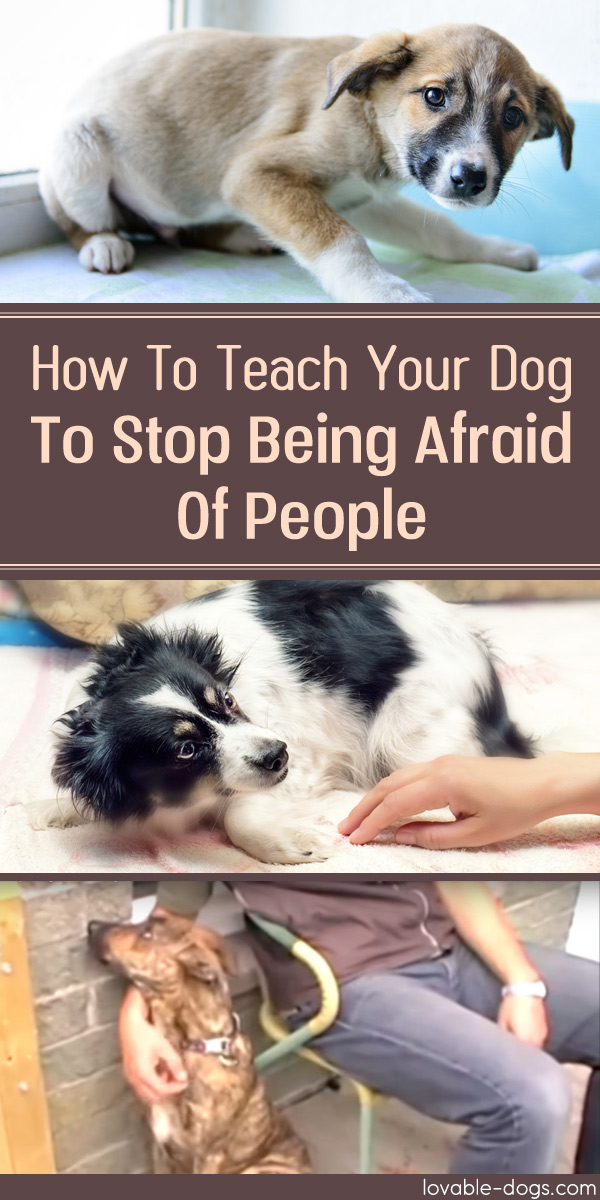 How To Teach Your Dog To Stop Being Afraid Of People