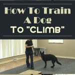 "How To Train A Dog To ""Climb"""