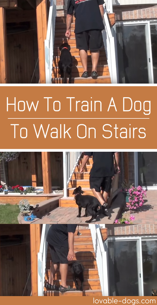 How To Train A Dog To Walk On Stairs