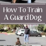 How To Train A Guard Dog