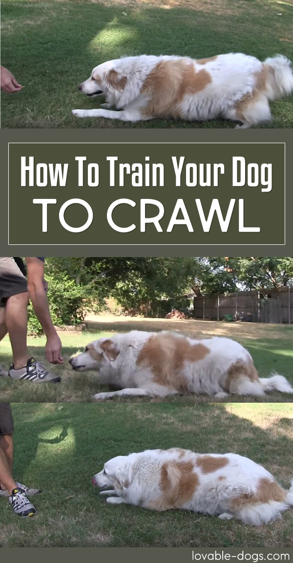 How To Train Your Dog To Crawl