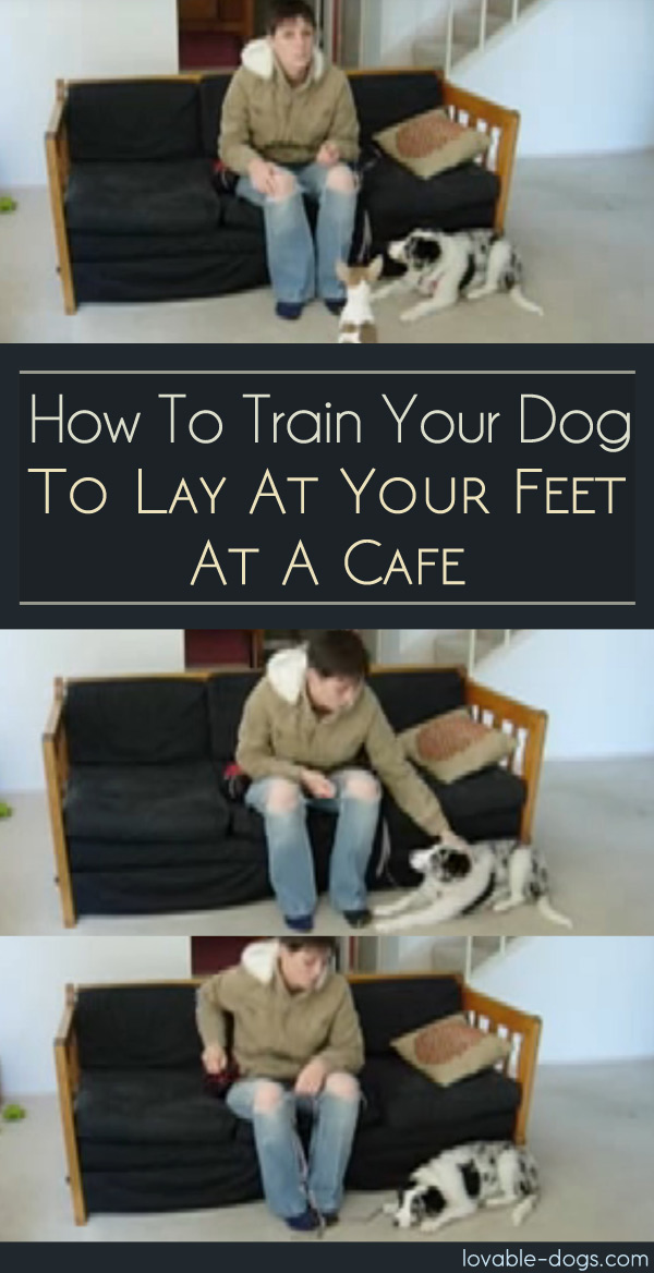 How To Train Your Dog To Lay At Your Feet At A Cafe