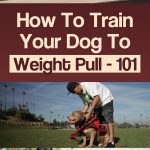 How To Train Your Dog To Weight Pull – 101