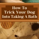 How To Trick Your Dog Into Taking A Bath