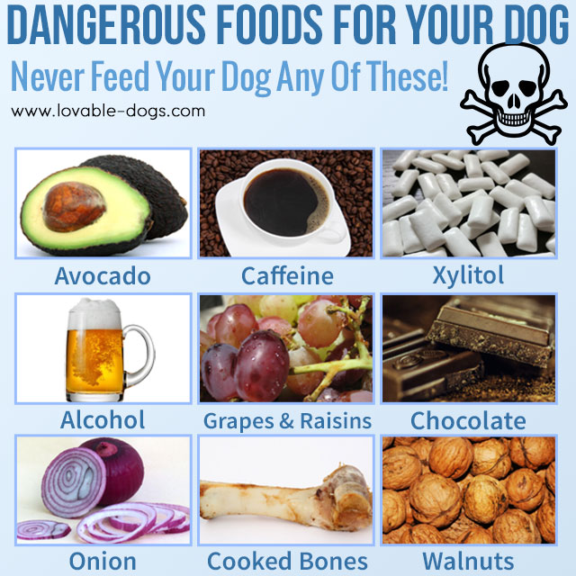 9 Dangerous Foods For Your Dog