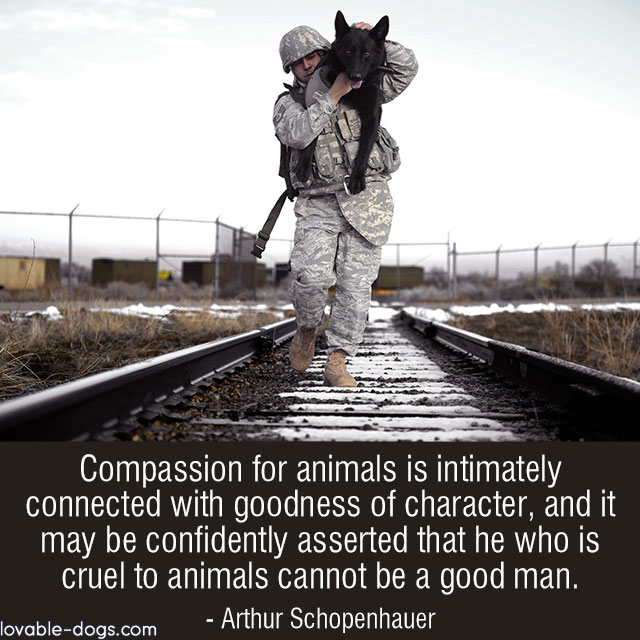 Compassion For Animals Is Intimately Connected With Goodness Of Character