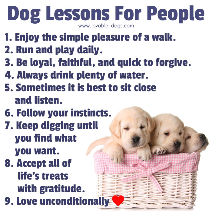 Dog Lessons For People