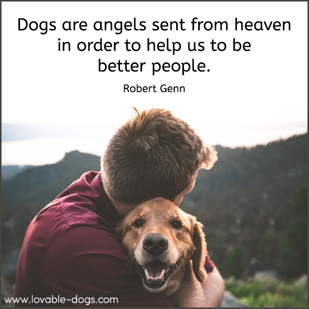 Dogs Are Angels Sent From Heaven