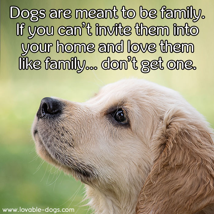 Dogs Are Meant To Be Family
