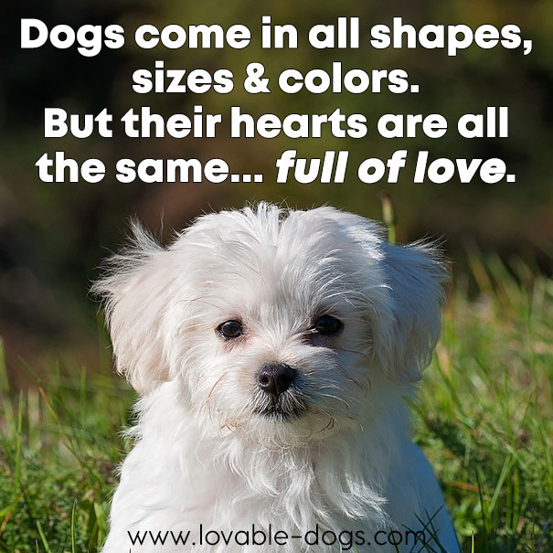 Dogs Come In All Shapes, Sizes And Colors