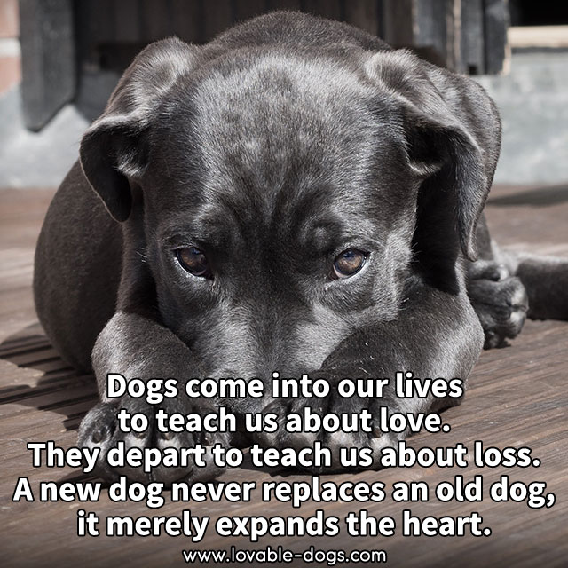 Dogs Come Into Our Lives To Teach Us About Love