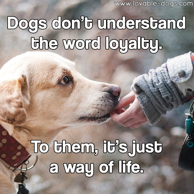 Dogs Don't Understand The Word Loyalty