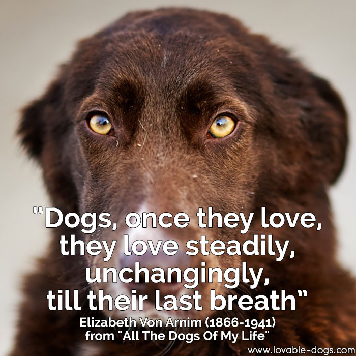Dogs, Once They Love