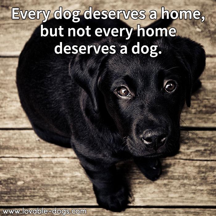 Every Dog Deserves A Home