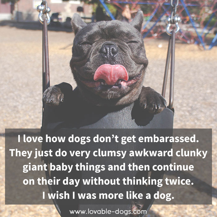 I Love How Dogs Don't Get Embarassed