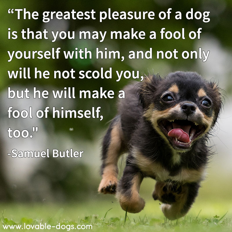 The Greatest Pleasure Of A Dog
