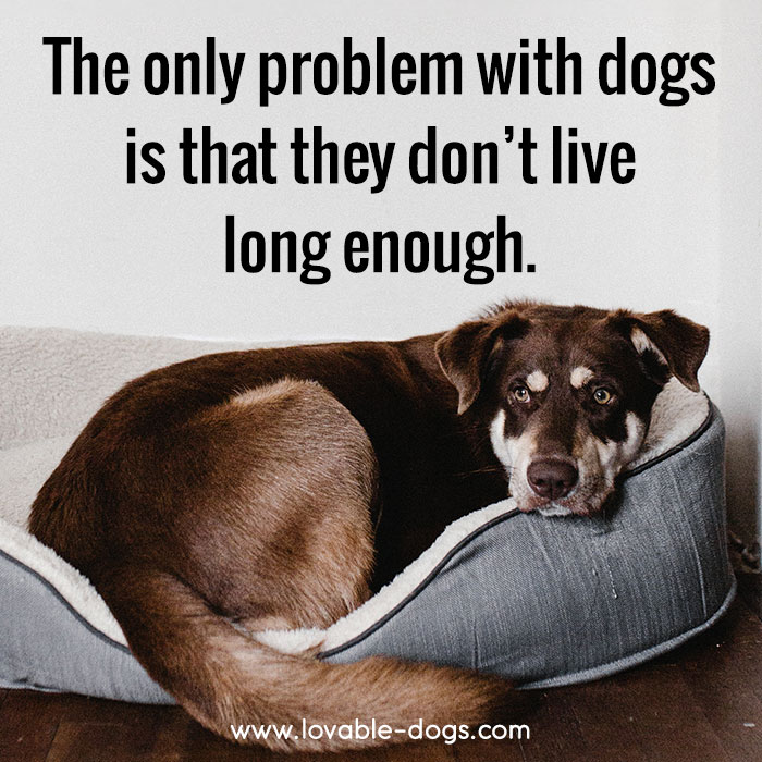 The Only Problem With Dogs