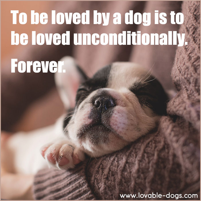 To Be Loved By A Dog