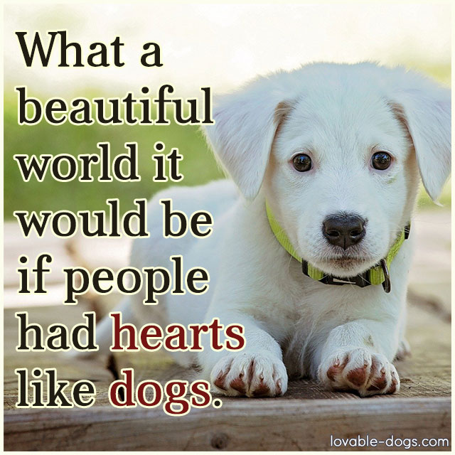 What A Beautiful World It Would Be If People Had Hearts Like Dogs