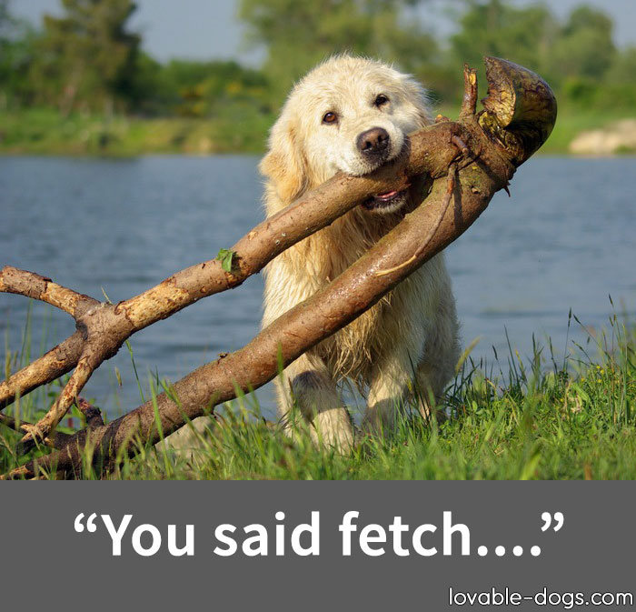 You Said Fetch